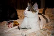 Очень красивые котята в дар ждут вас!